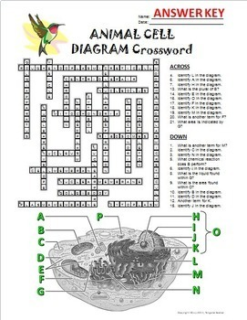 Animal Cell Crossword with Diagram {Editable}
