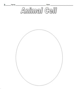Animal Cell Diagram (Structures and Functions) PowerPoint