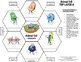 Animal Cell - Interactive Notebook Foldable Graphic Organizer