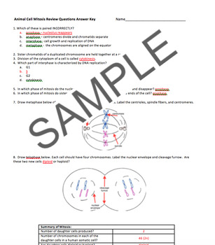 Animal Cell Mitosis Review Questions with Answer Key