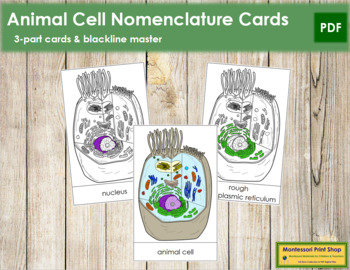 Animal Cell Nomenclature Cards
