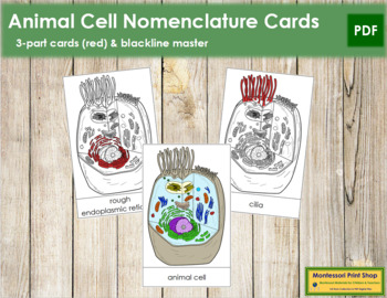 Animal Cell Nomenclature Cards (Red)