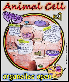 Animal Cell Organelle Cut and Paste Foldable