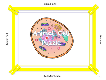 Animal Cell Organelle Pinwheel Vocabulary Puzzle...Life Size!
