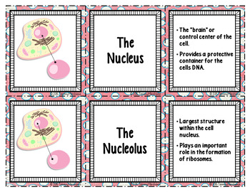 Animal Cell Organelles - Card Sort