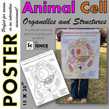 Animal Cell Organelles and Structures Coloring Poster for Review or Assessment