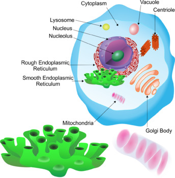 Animal Cell Parts Clip Art