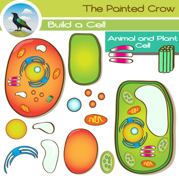 Animal Cell & Plant Cell Clip Art - 28 Piece Set - Color & Blackline Graphics