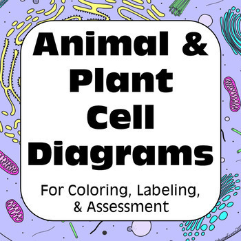 Plant And Animal Cells Animal Cell Plant Cell Diagrams For