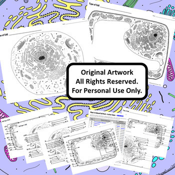 Plant and Animal Cells: Animal Cell & Plant Cell Diagrams for Matching Labeling