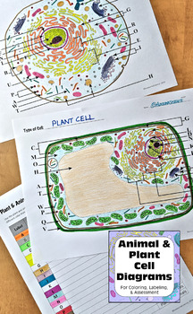 Plant & Animal Cell Diagrams for Coloring Matching ...