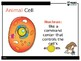 Animal Cell PowerPoint