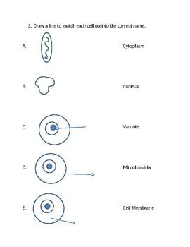 Animal Cell Quiz