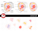 Animal Cell Science Diagram Clipart by Poppydreamz