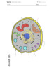 Animal Cell Science Journal Illustration