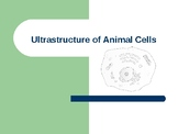 Animal Cell Structure PowerPoint