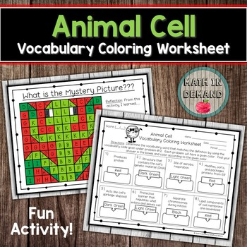 Animal Cell Vocabulary Coloring Worksheet