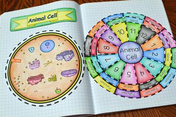 Animal Cell Wheel Foldable
