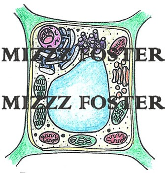 Animal Cell and Plant Cell Clip art (color and Black&white)