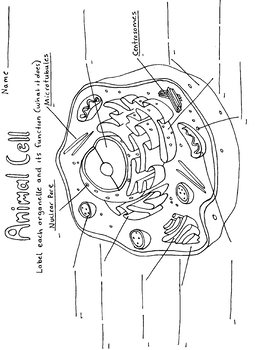 Animal Cell Coloring Page Worksheet By Tessa Arnett Tpt