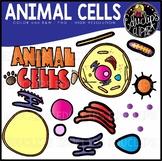 Animal Cells Clip Art Set {Educlips Clipart}
