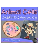 Animal Cells Worksheet and Answer Key