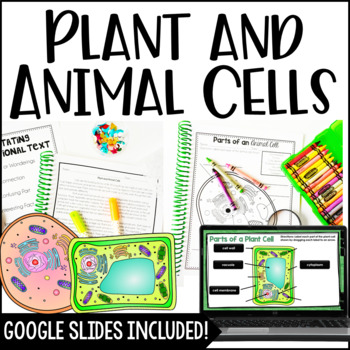 Cells (Plant and Animal Cells) by Jennifer Findley   TpT