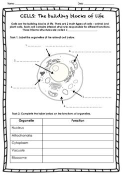 Animal Cells worksheet