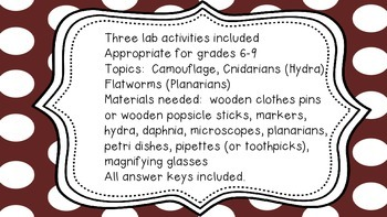 Animal Characteristics:  Activities for Camouflage, Cnidarians and Flatworms