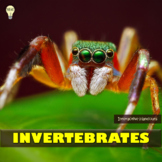 Animal Characteristics Invertebrates Handouts Cards Poster