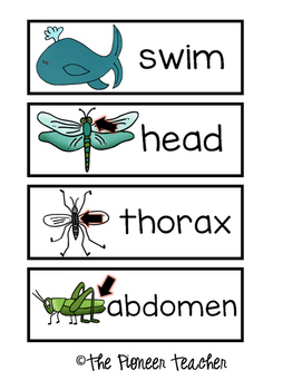 Animal Characteristics Write Around The Room