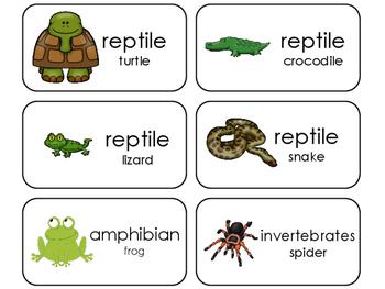 Animal Class Identification Flashcards. Preschool-Kindergarten Animal Science