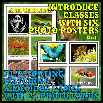 Animal Classes for PK-1: Amazing Animals Super Bundle