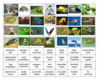 Animal Classification Activity and Center