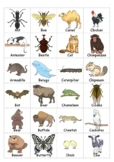 Animal Classification: Animal Groups Sorting Card for Kids