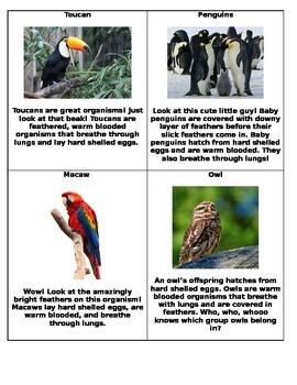 Animal Classification Around the Room!