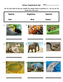 Animal Classification Assessment