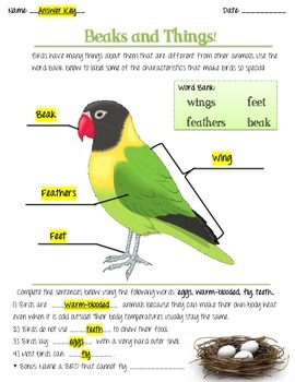 Animal Classification Assessment - Birds, Beaks, and things!