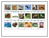 Animal Classification Assessment