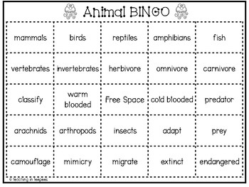 Animal Classification Bingo