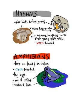 Animal Classification- Compare/Contrast
