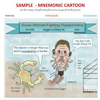 Animal Classification:  Invertebrate Mnemonic Cartoon Posters