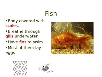 Animal Classification PPT - theory and game