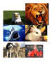 Animal Classification Picture Sort