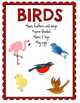 Animal Classification Posters ~ Reptile, Amphibian, Mammal, Fish, Insect, Bird
