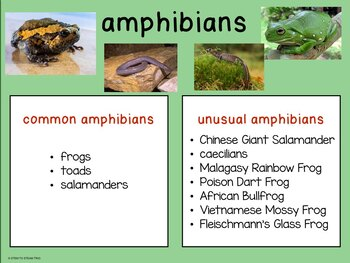 Animal Classification Posters and  Computer Activity