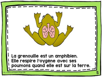 French Animal Classification Reader  - Les amphibiens