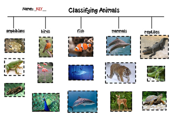 Animal Classification Sort