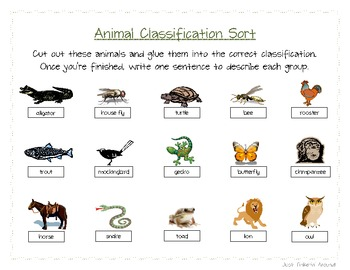Animal Classification Sort- 6 Different Groups!