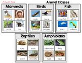 Animal Classification Sort - Mammals, Birds, Fish, Reptiles, and Amphibians